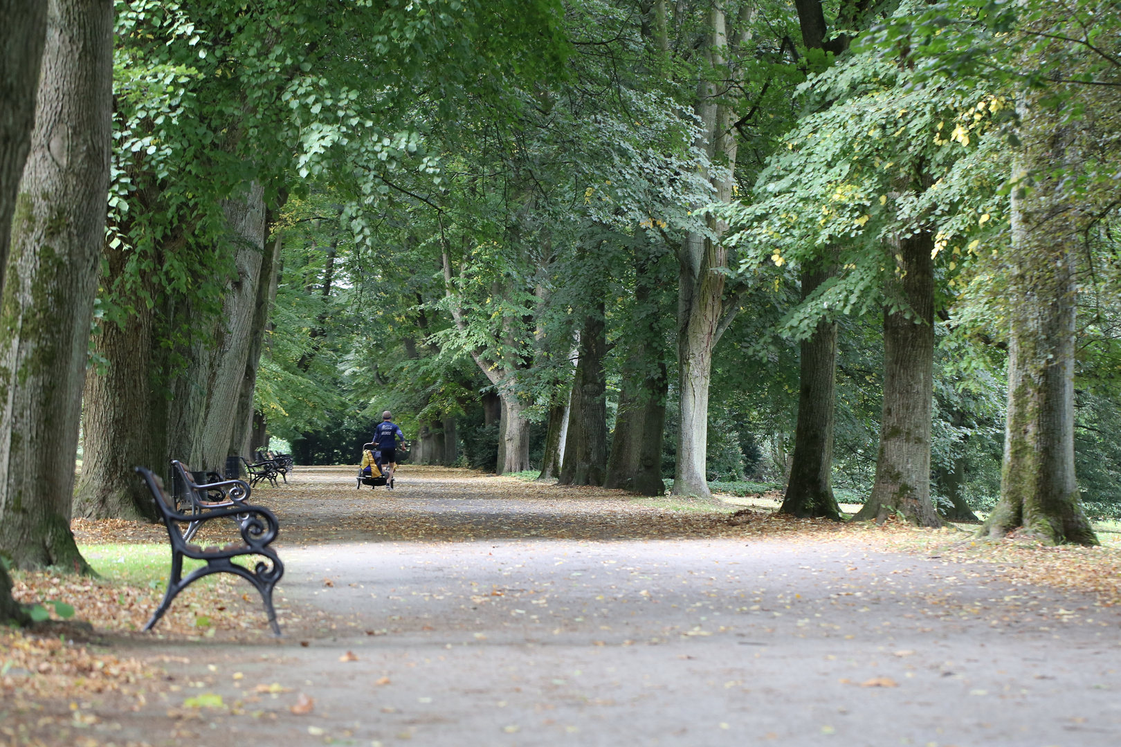 Allee im Rombergpark, Dortmund