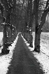 Allee im Winter...