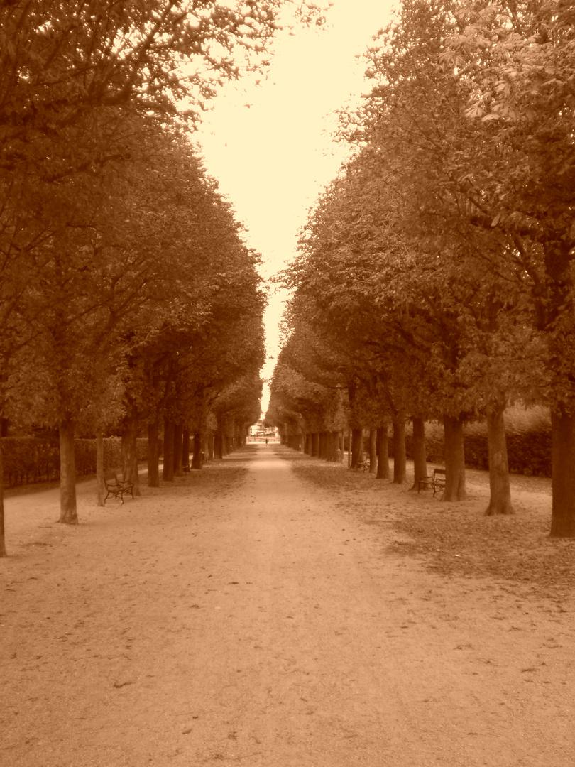 Allee in Wienerpark