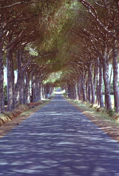 Allee (n)irgendwo in der Toscana