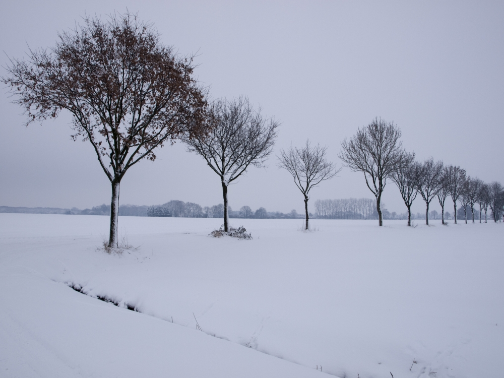 Allee - Winter