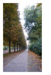 Allee zum Park Sanssouci