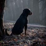 Allein im Nebelwald