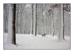 Allein im Wald?