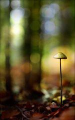 Allein im Wald...