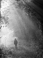 Allein im Wald