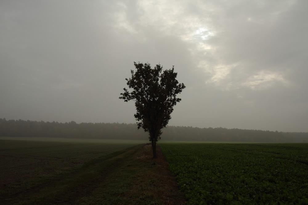 Alleine im Nebel.