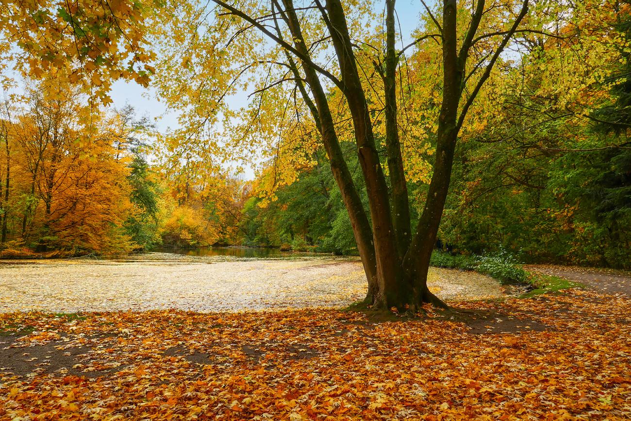 Alleine im Park