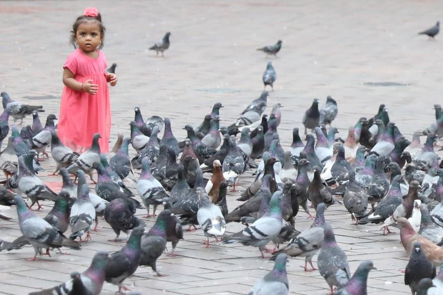alleine unter Tauben