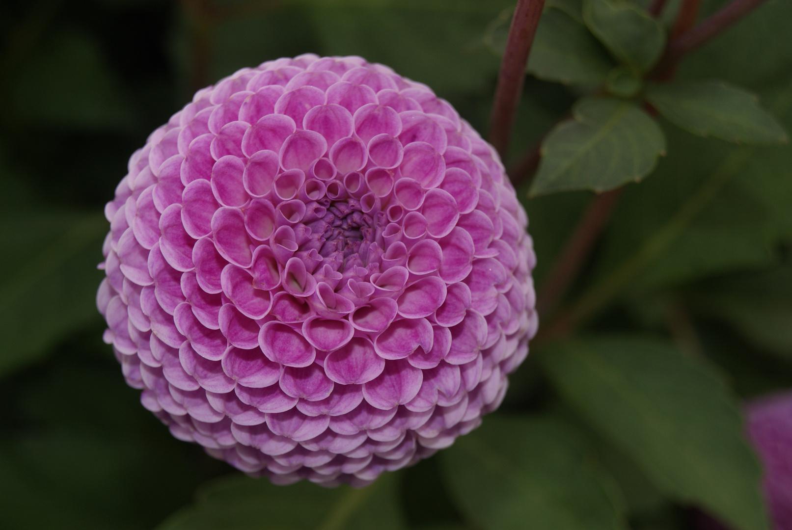 alleingelassene Blume