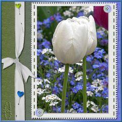 Alleinstehende Tulpe
