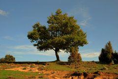 Alleinstehender Baum # Un árbol solitario