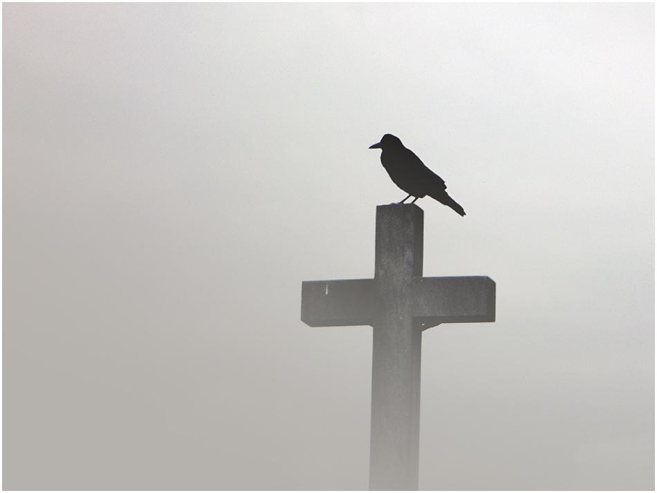 Allerheiligenkrähe