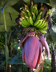 Alles Banane.......