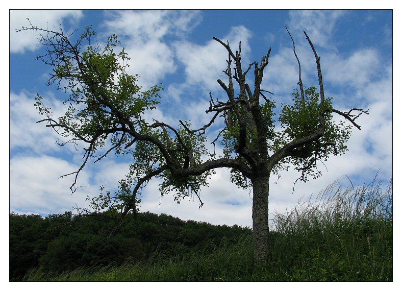 alles Baum