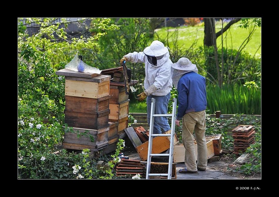 Alles für die Bienen, und für eine gute Honigausbeute.