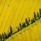 Alles Gelb...