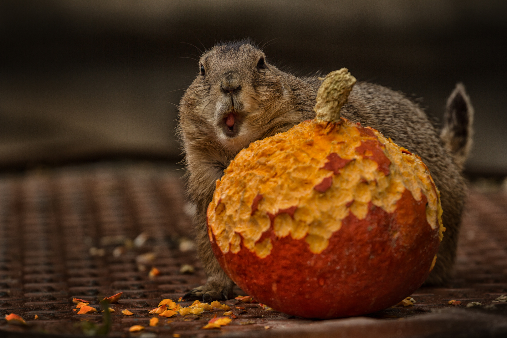 alles Gute bringt der Herbst
