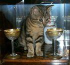 Alles Gute für 2004 und nicht zu tief ins Glas schaun, sonst seht Ihr alles doppelt ;-)