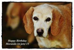 Alles Gute zum 15. Geburtstag