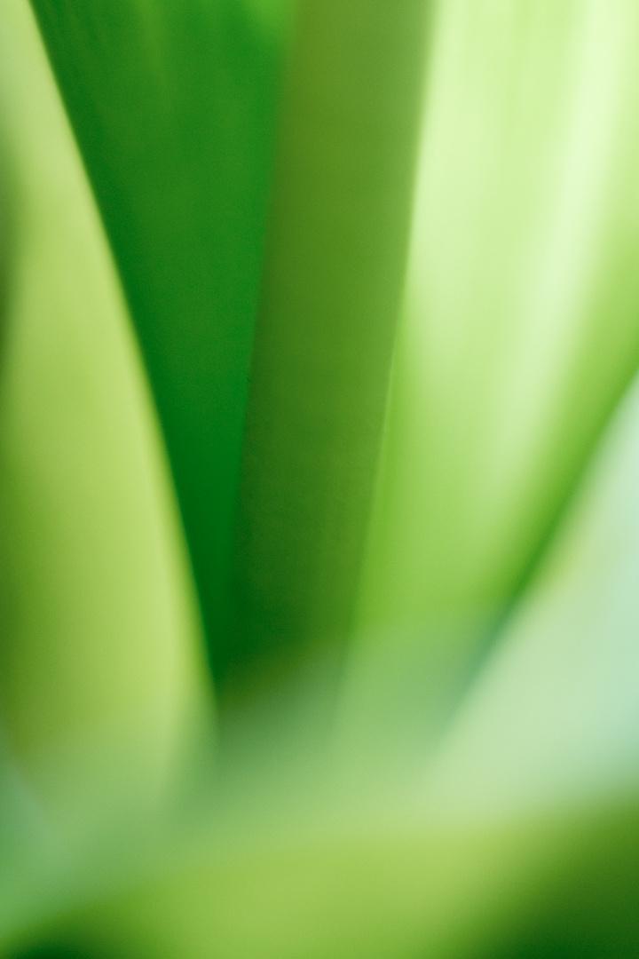 alles im grünen Bereich