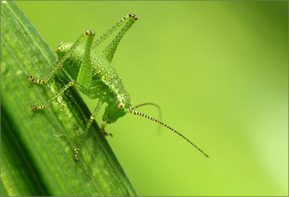 Alles Im Grünen Bereich Foto Bild Tiere Wildlife Insekten
