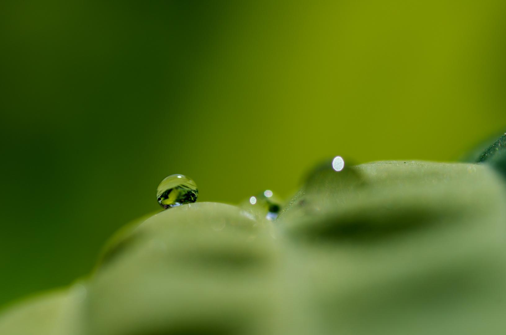 Alles Im Grünen Bereich Foto Bild Jahreszeiten Sommer Natur