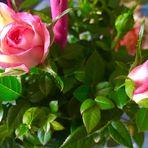 Alles Liebe allen (Mit )Müttern zum Muttertag