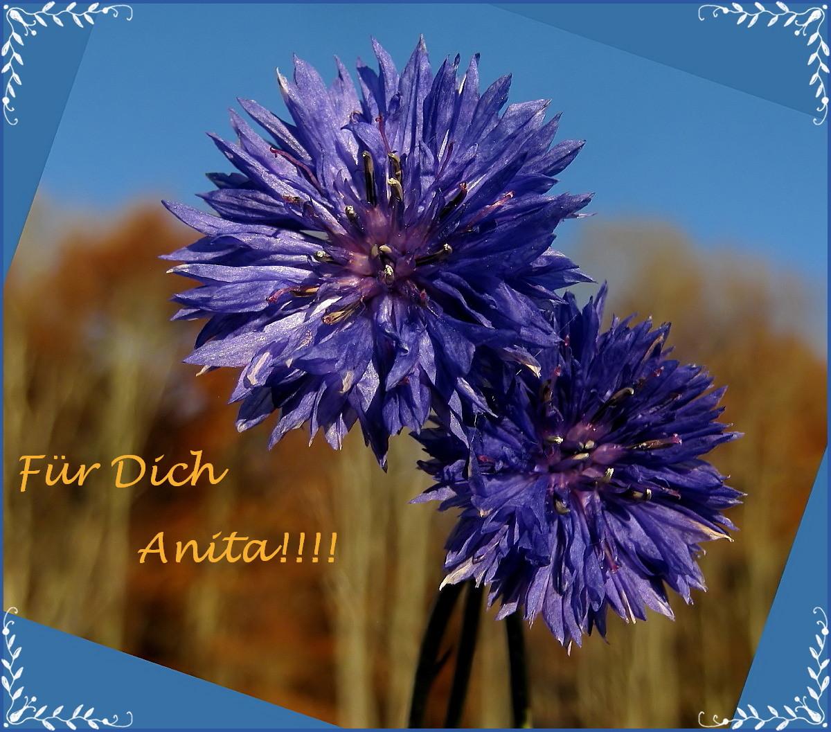 Alles Liebe für Anita!!
