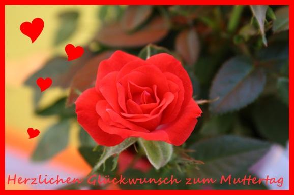 Alles liebe zum Muttertag wünsche ich allen Müttern.