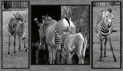 Alles Zebra oder was!!!????