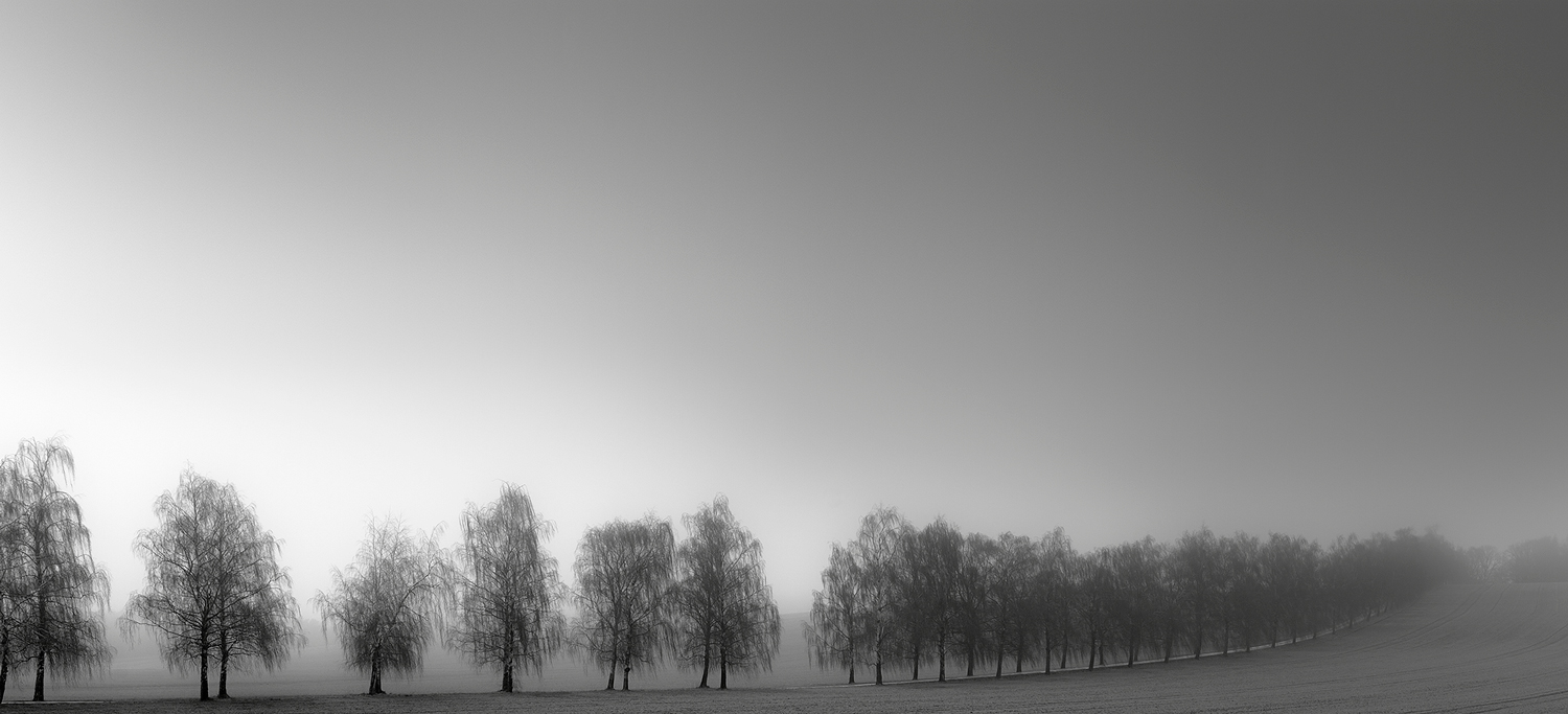 ALLEY TREES IN THE MIST [01|BW]