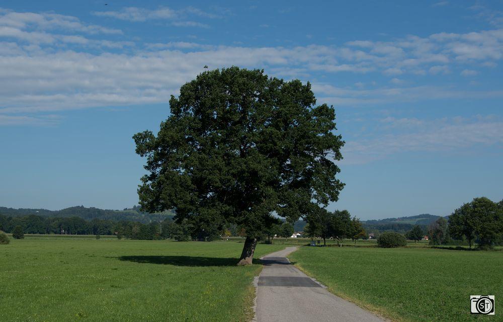 Allgäu - Ein Baum