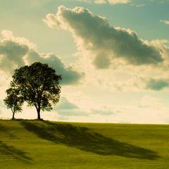 Allgäuer Bäume