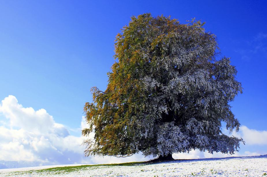 Allgauer Herbst Winter Kollektion Foto Bild Deutschland Europe