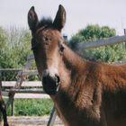 Alli's foal