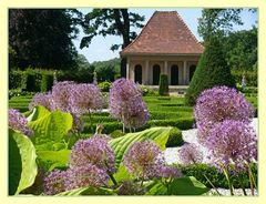 Allium im Barockgarten von Schloss Wolfsburg