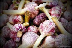 Allium sativum ....