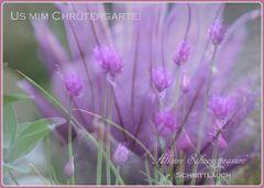 """""""Allium schoenoprasum"""" Schnittlauch Präsentation!"""