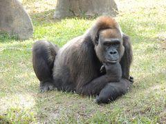 Allo Zoo di Miami_2