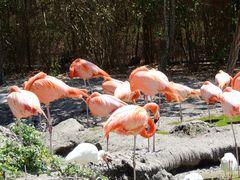 Allo Zoo di Miami_3