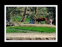 Alltag am Nil 36