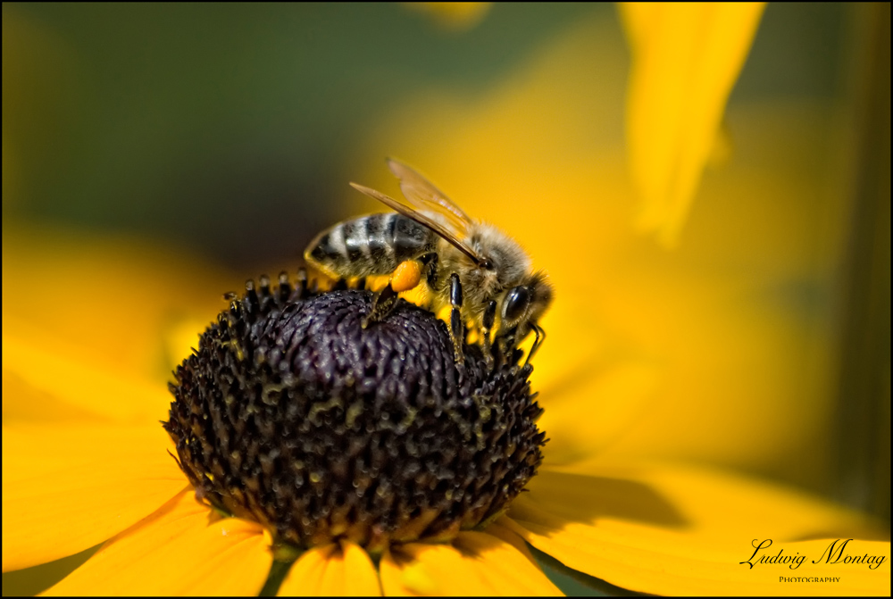 Alltag einer Bienensammlerin...