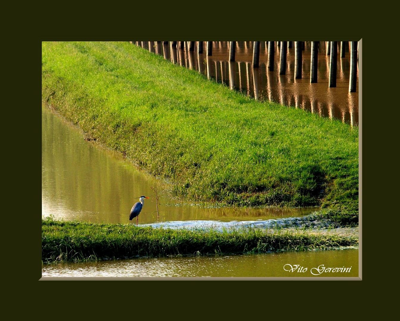 Alluvione del Po