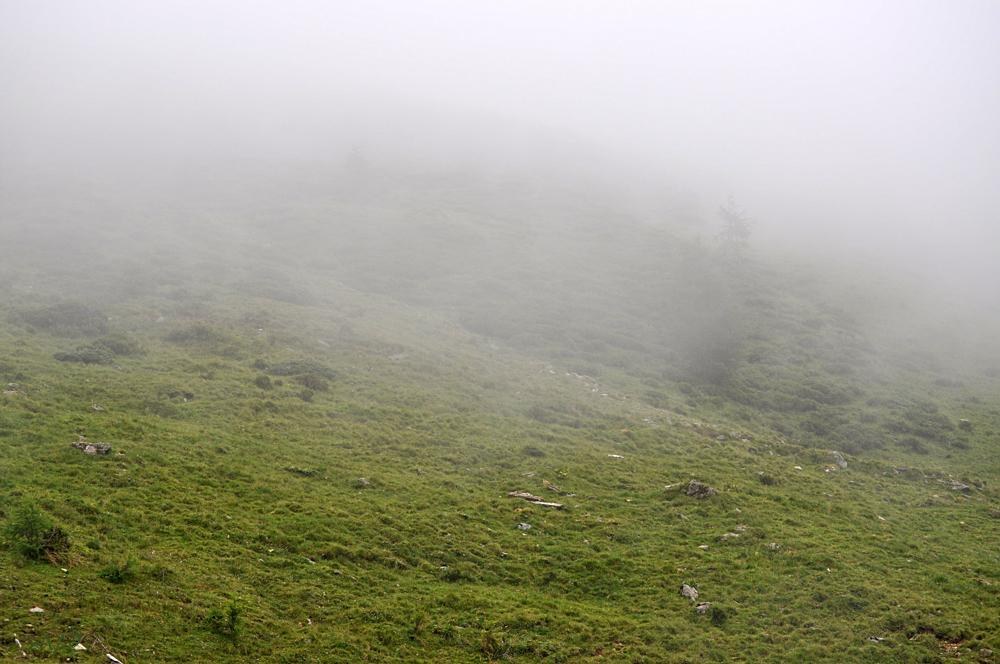Almwiese im Nebel