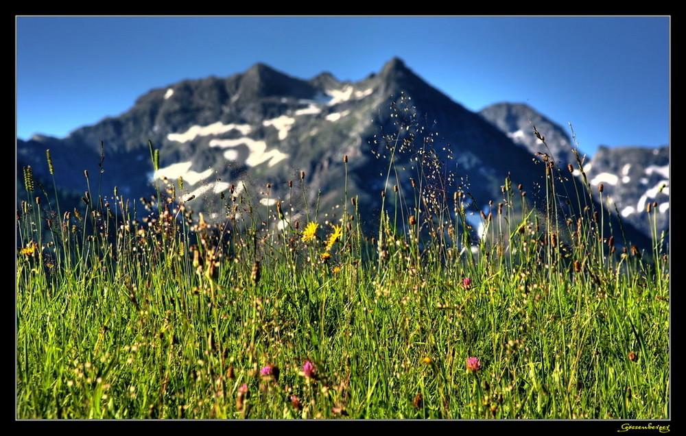 Almwiese mit Scheibleck 2117 m