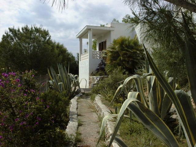 Aloe Vera in my garden in Valencia