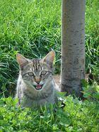 Alone cat...