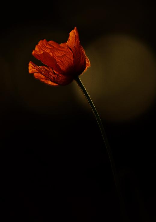 Alone in the Dark 02