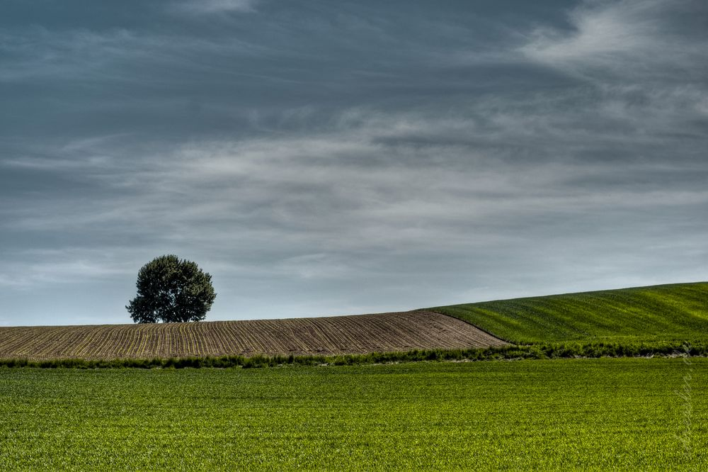 . : alone in the field : .